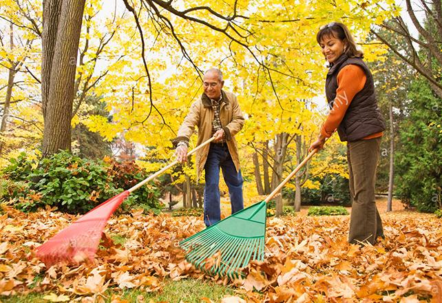 Couple raking leaves